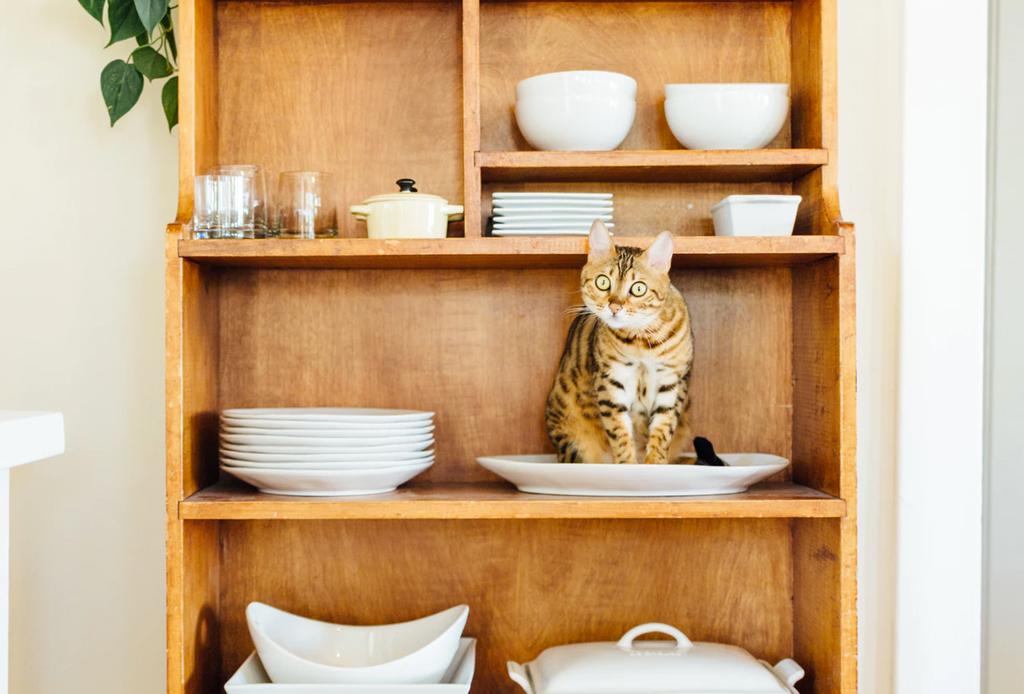 Características que indiscutiblemente amarás de un gato como mascota - decoracion-amantes-gatos-1024x694