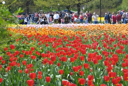 ¡Visita estos festivales de flores alrededor del mundo que te encantarán! - festivales-de-flores-en-el-mundo-7-300x203