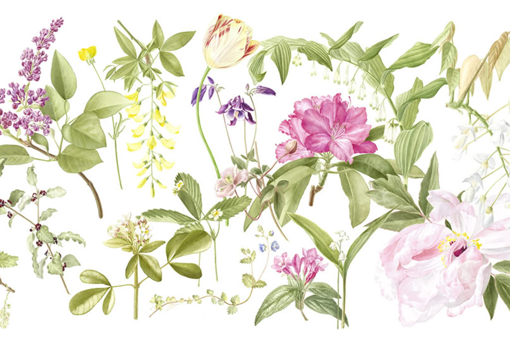 Las mejores ilustraciones de botánica para decorar tus paredes