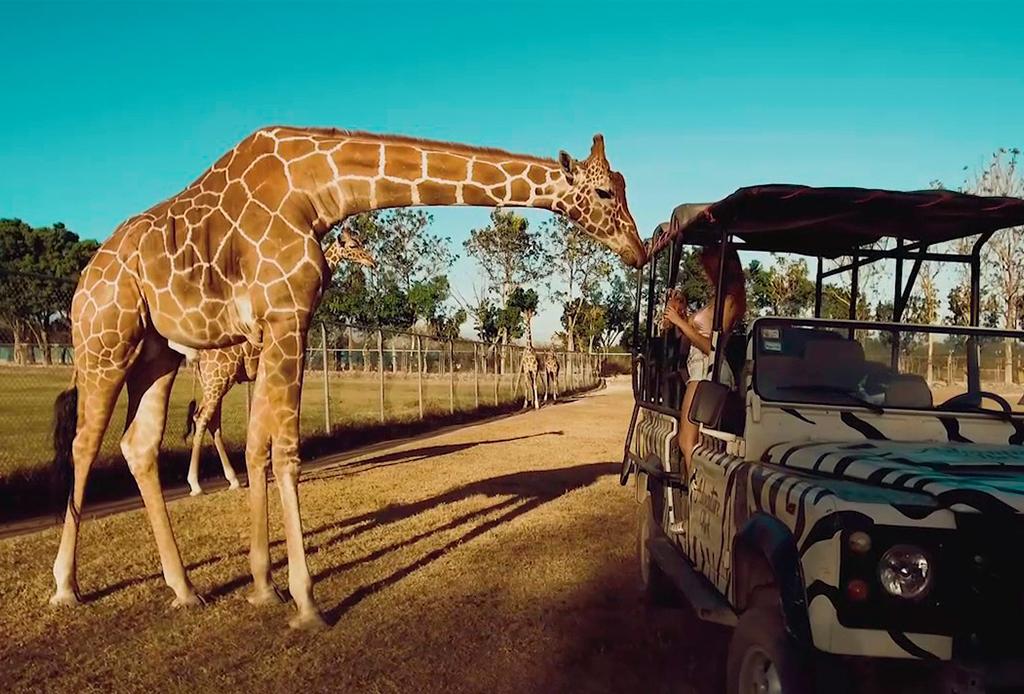 ¿Buscas un nuevo destino para vacacionar? ¡Te damos 5 razones para ir a Liberia, Costa Rica! - liberia2