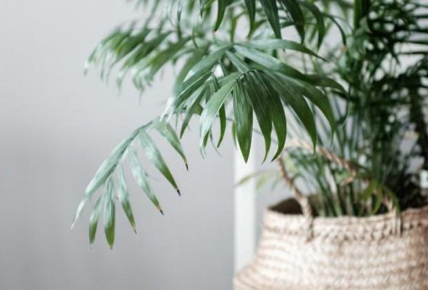 Plantas que ayudan a purificar el ambiente de tu casa - plantasinterior2-1