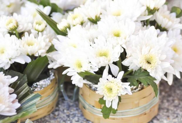 Plantas que ayudan a purificar el ambiente de tu casa - plantasinterior7-1