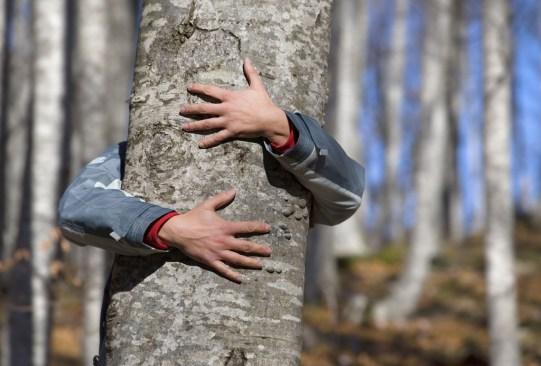 ¡Es un hecho! Abrazar árboles es bueno para tu salud - abrazar-arboles-1-300x203