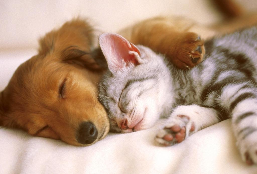 Formas en que nuestras mascotas nos han salvado, sobre todo en cuarentena - diy-cama-para-mascota-1024x694