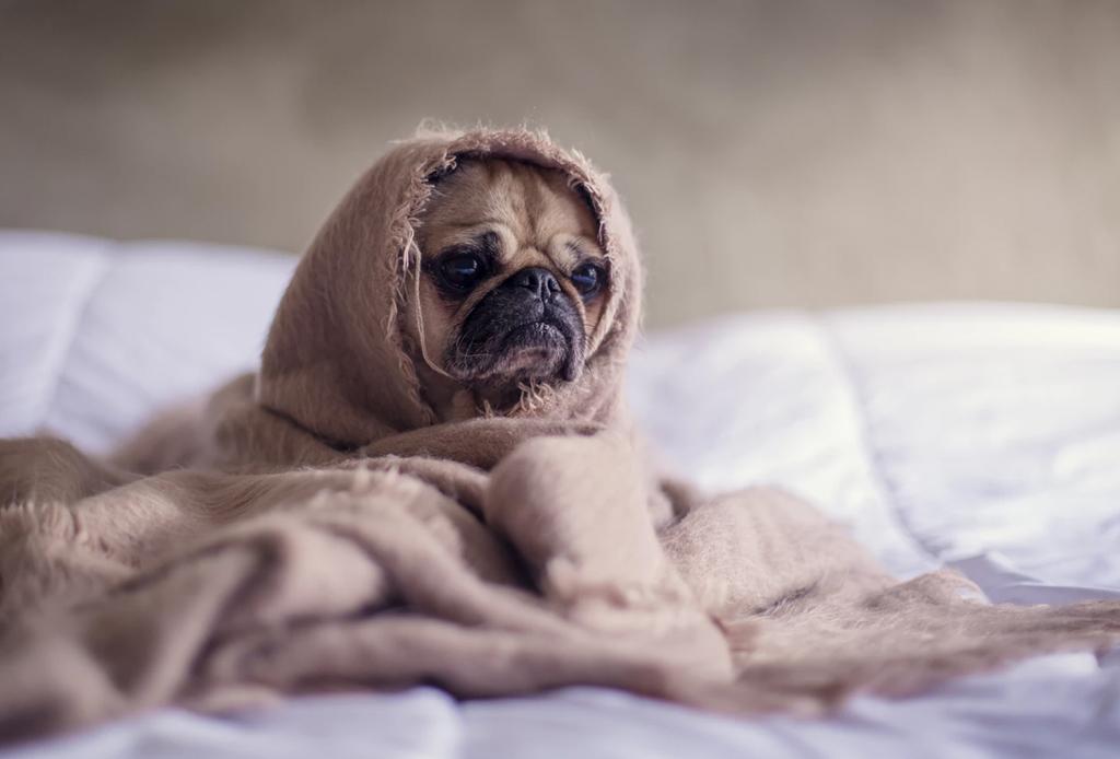 ¿Realmente tu perro necesita un suéter para el invierno?