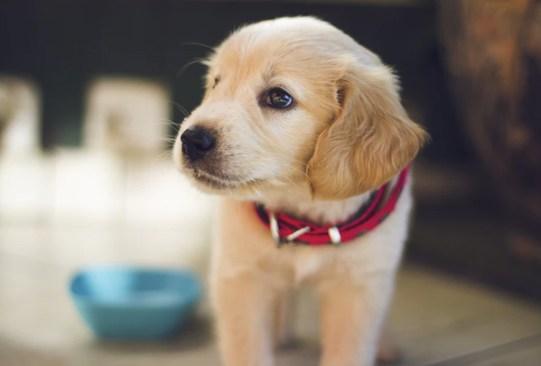 ¡Ahora podrás tomar el té con tu perrito! - te-para-perros-barking-mad-creations-1-300x203