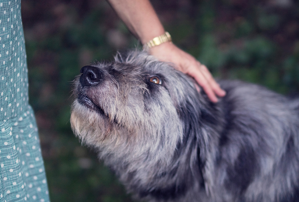 ¿Qué dice el comportamiento de tu perro sobre ti? - personalidad-perros-5