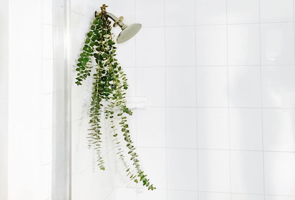 Básicos para relajarte en la ducha - eucalipto