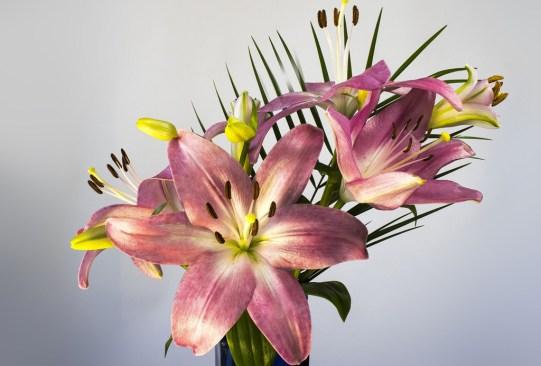 ¿Sabes cuáles son las flores favoritas de las mexicanos actualmente? Regálalas este 14 de febrero - lirio-300x203