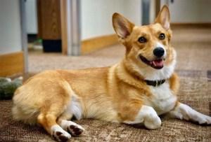 ¿Tu perro es muy inquieto? Esta playlist lo ayudará a reducir sus niveles de energía