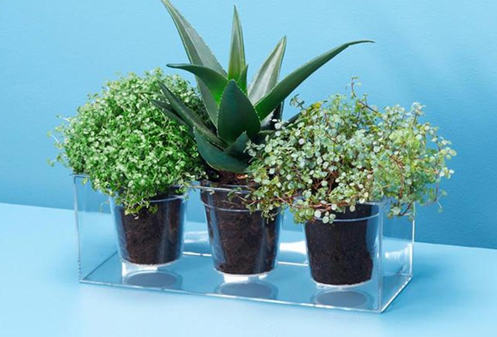 Estas macetas autónomas te harán la vida más sencilla para cuidar tus plantas