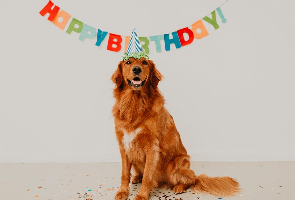 5 formas de celebrar el cumpleaños de tu perro