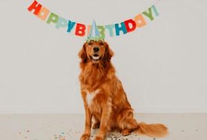 Celebra el cumpleaños de tu perrito con este pastel especialmente para él