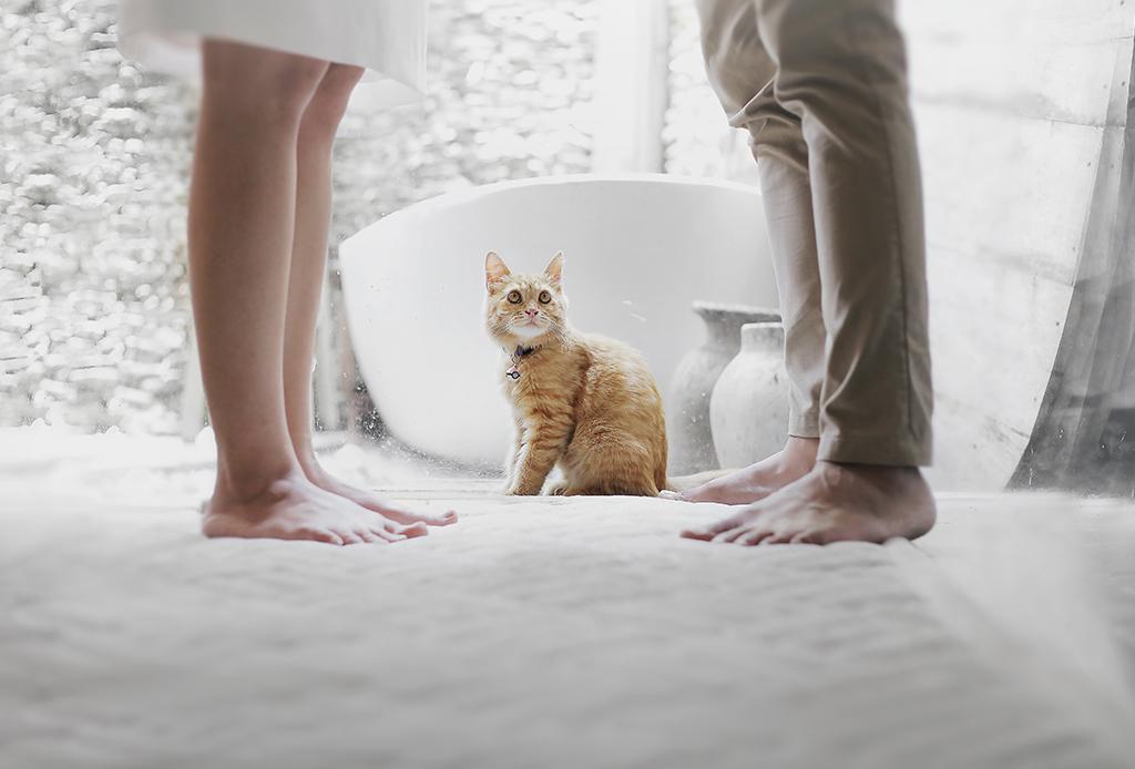 Prepara a tu mascota para la llegada de tu bebé - perritos-bebes-5