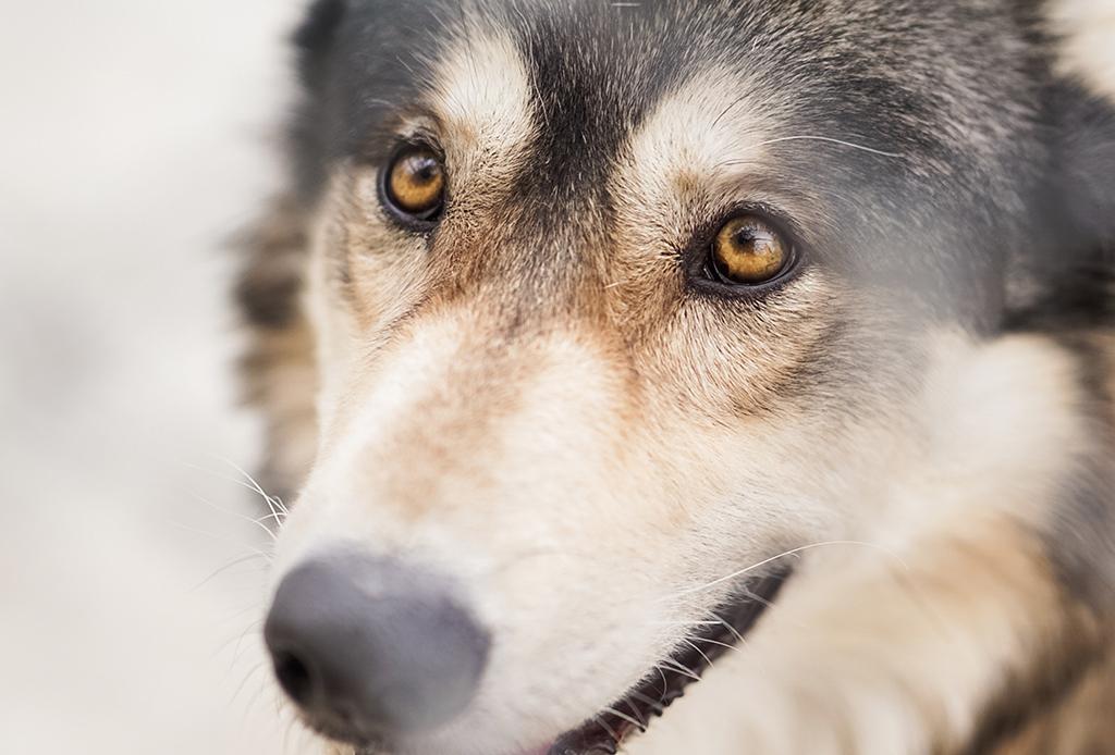 Los mejores ejercicios mentales para tu perro - perritos-mentales-5-1024x694