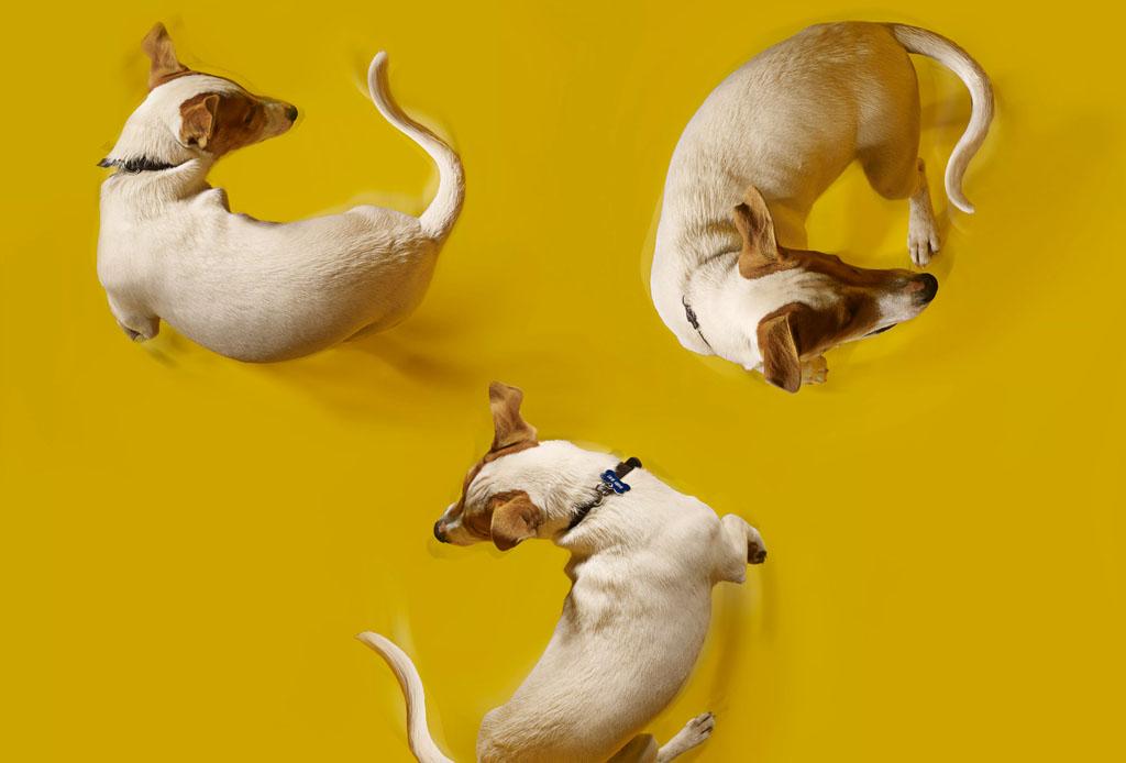 Happenings: Todo lo que puedes hacer este fin de semana (19 - 21 julio) - trucos-perro-5-1024x694