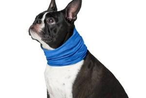 Esta es la solución para que tu perrito no sufra con el calor