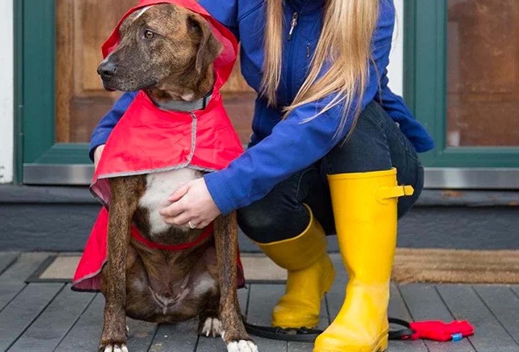 Que la lluvia no te impida pasear a tu perrito - perros-lluvia-2-1024x694