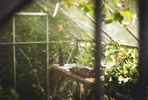 Esta planta podría detener el cambio climático