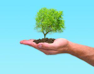 Reduce tu huella de carbono en 4 pasos