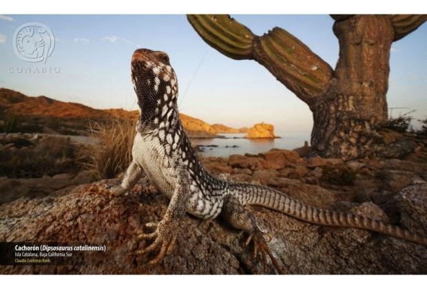 Las mejores fotografías de naturaleza mexicana 2019 - concurso-nacional-de-fotografia-de-naturaleza-2019-2-8