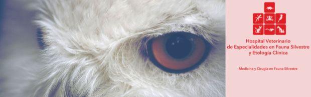 Terapia para perros, algo normal y necesario - etologia