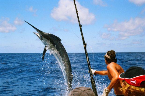 Los mejores lugares en México para hacer pesca deportiva - pez-vela