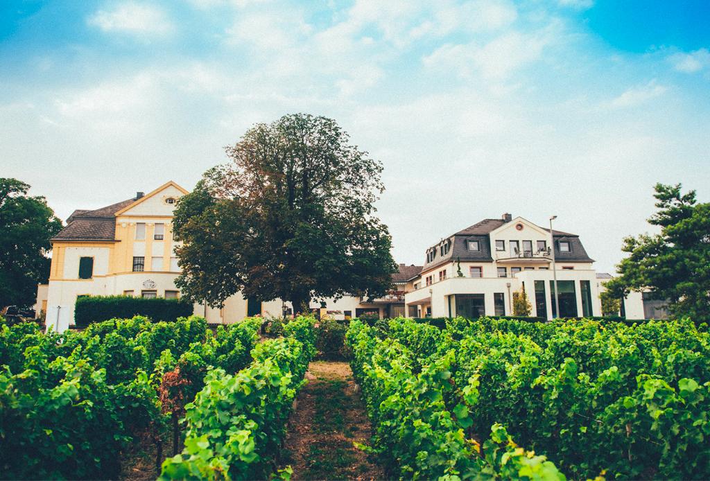 4 bodegas de vino que tienes que conocer en Bingen, Alemania - vino-en-bingen-3-1024x694