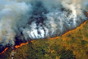 Estas son las organizaciones en las que puedes donar para salvar el Amazonas