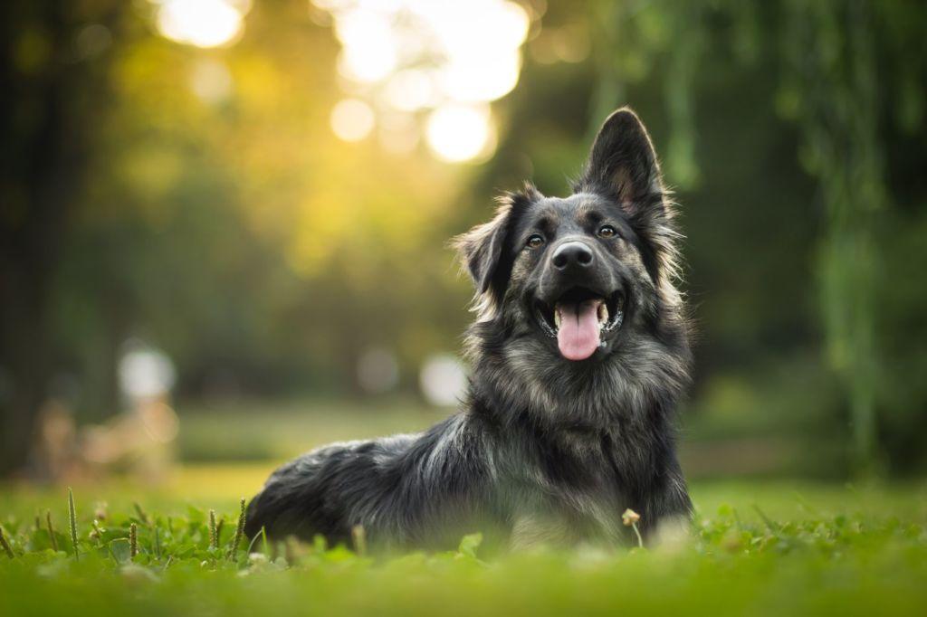 Estas son las maneras en las que tu perro te dice que te quiere - perro-1-1024x682
