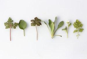 Suplementos herbales que te ayudarán a cuidar y mejorar tu salud
