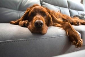 5 trucos fáciles para quitar pelos de tu mascota