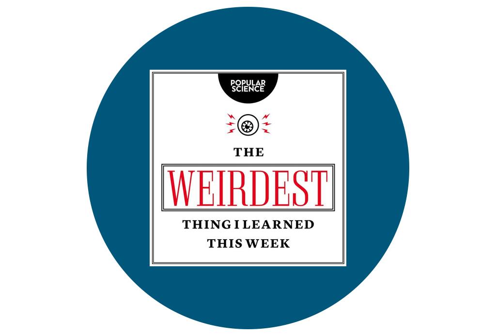 Destapa tu curiosidad con estos podcasts para aprender información peculiar - podcasts-curiosos-1-1024x694