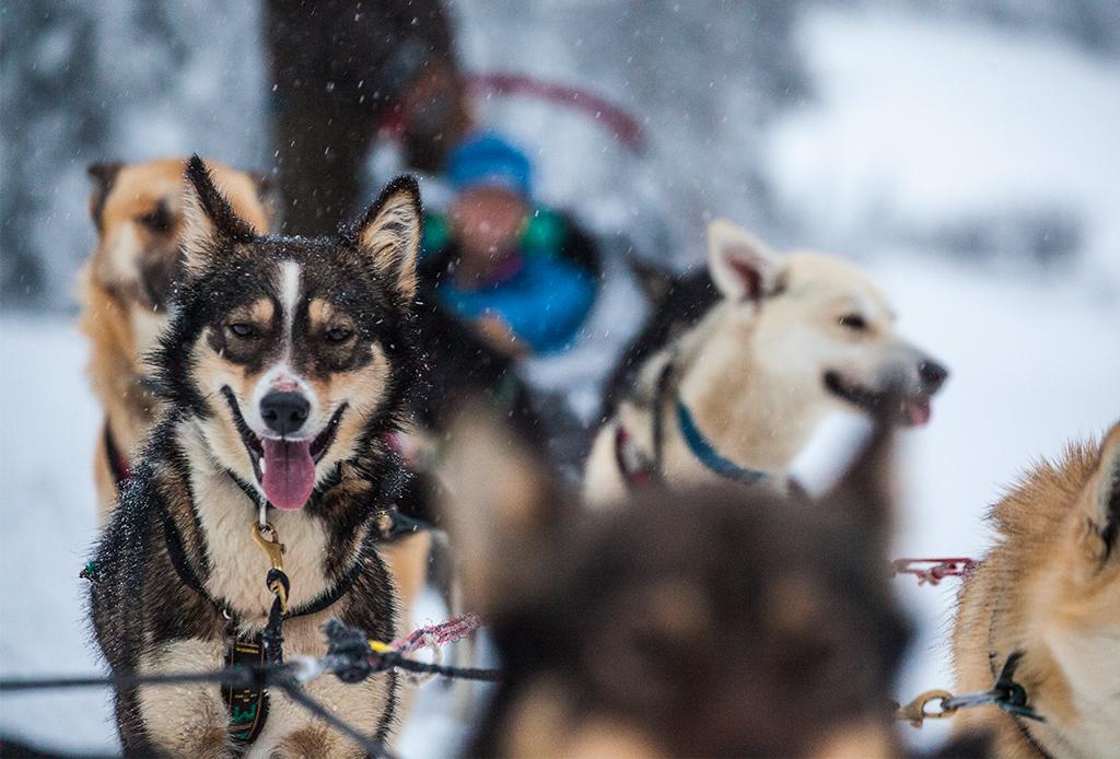 4 actividades que puedes hacer en la Columbia Británica y no tienen que ver con esquiar