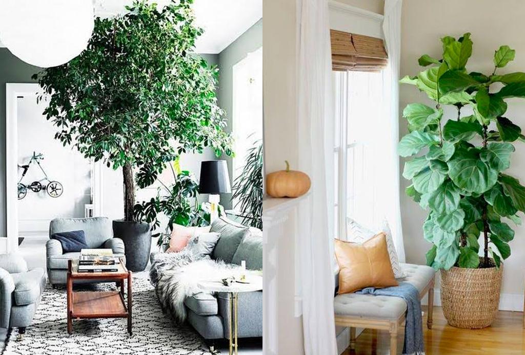 ¿Árboles dentro de casa? Así es como puedes integrarlos a tu decoración