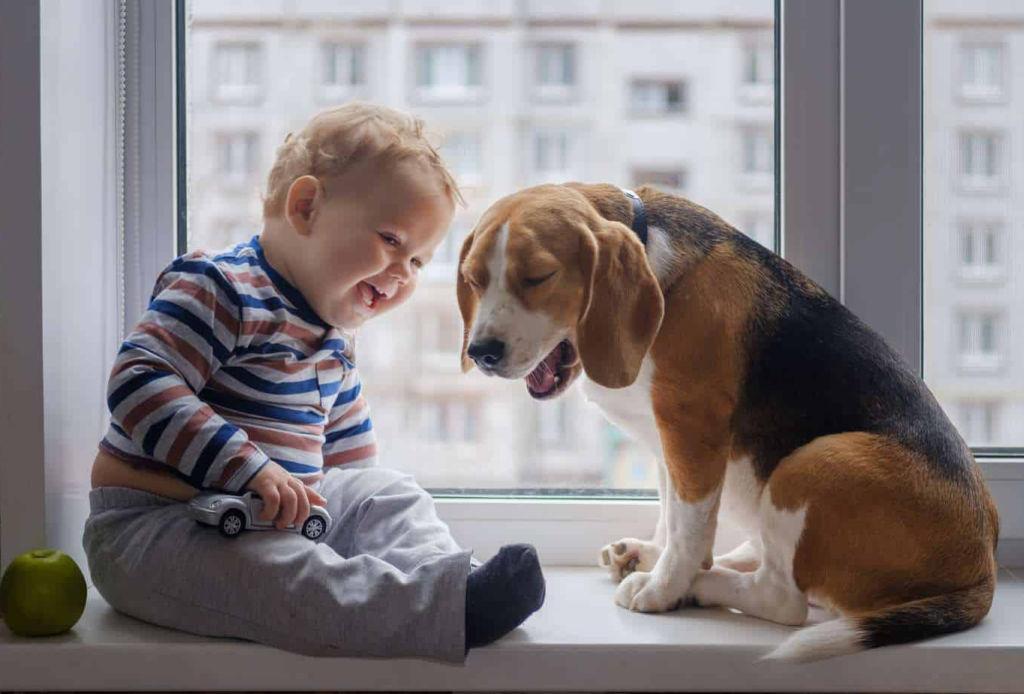 Así debes preparar a tu mascota ante la llegada de un bebé a casa - perro-departamento-1024x694