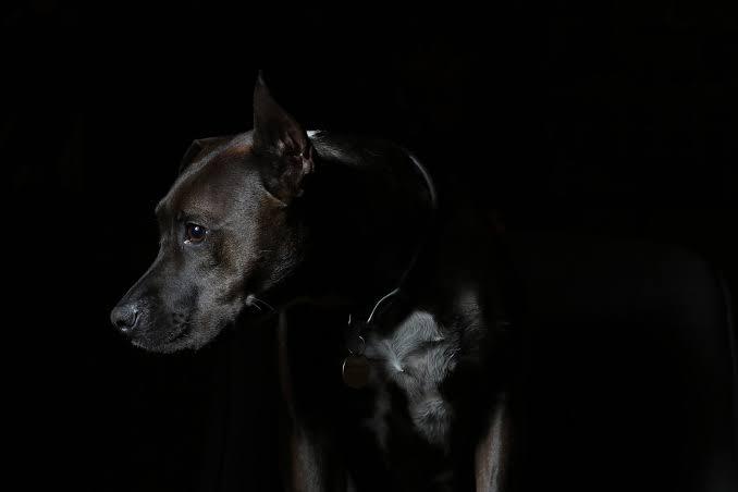 Cómo ayudar a tu perrito si tiene miedo a otras mascotas - perro