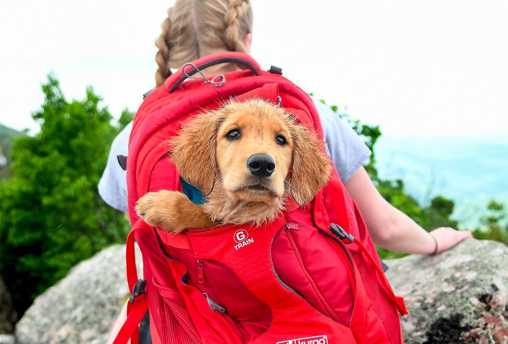 Así es como debes comenzar a entrenar a tu cachorro - mochilas-perro-1024x694