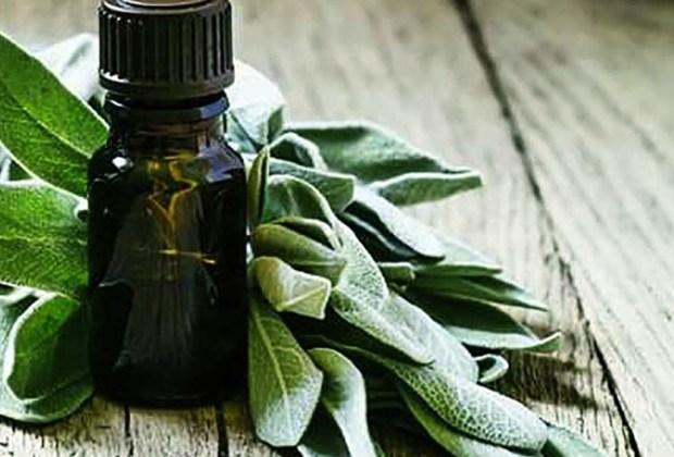 Algunos aceites esenciales que pueden ayudarte a reducir el SPM - salvia-aceite-esencial