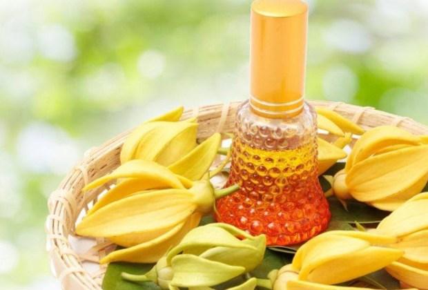 Algunos aceites esenciales que pueden ayudarte a reducir el SPM - ylang-ylang-aceite-esencial