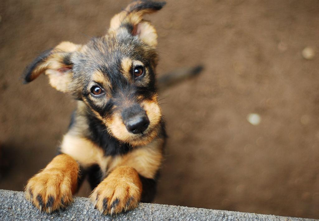 Así puedes ayudar a un perro adoptado a sentirse seguro en su nuevo hogar - adoptado