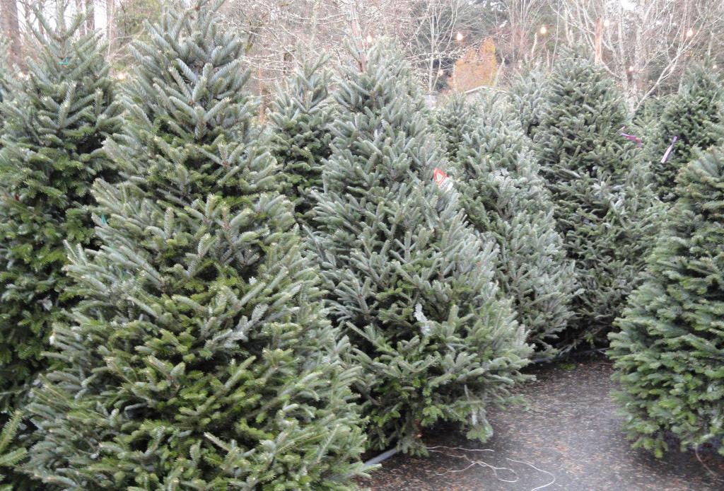 Maneras de hacer tus fiestas navideñas más sustentables - arbol-navidad
