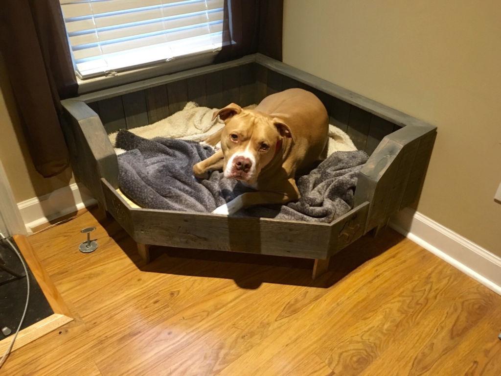 Así puedes ayudar a un perro adoptado a sentirse seguro en su nuevo hogar - esquina-perro