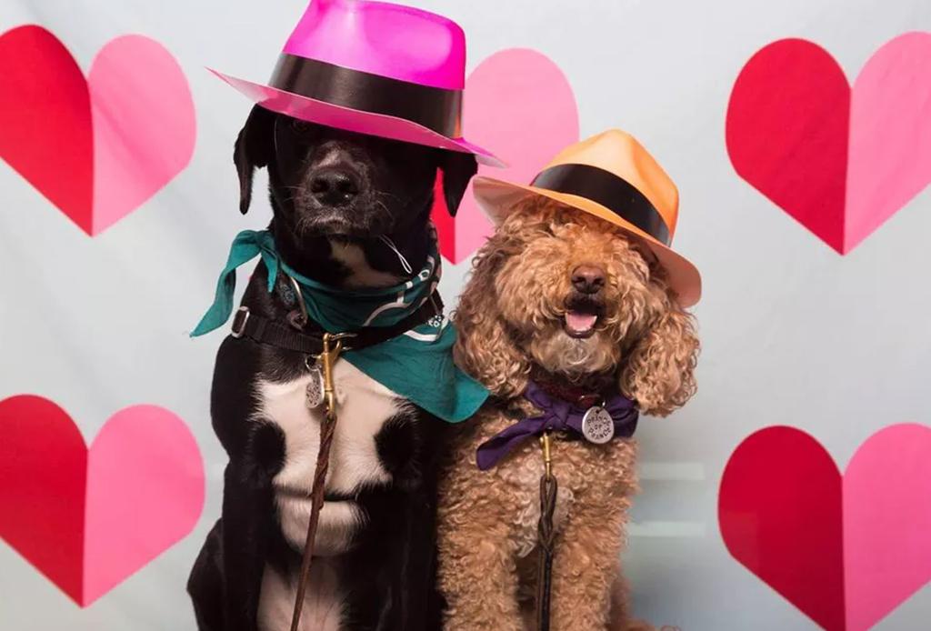5 formas de celebrar el cumpleaños de tu perro - fotos-perro