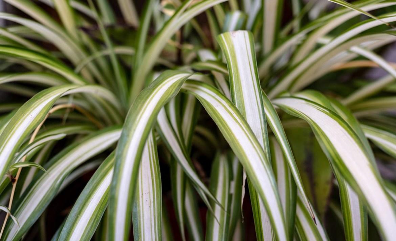 ¿Quieres entender el mundo de las plantas? Estas son las mejores para principiantes - cintas-plantas-principiantes
