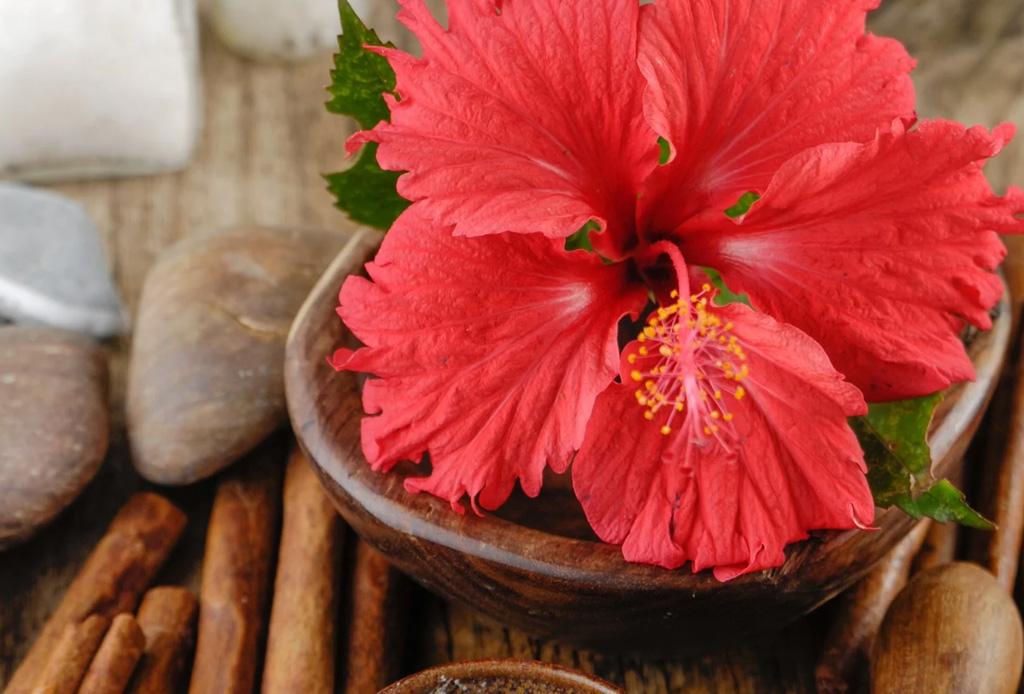 La flor de jamaica se convertirá en tu nuevo ingrediente favorito de skincare, ¡te decimos por qué! - flor-jamaica