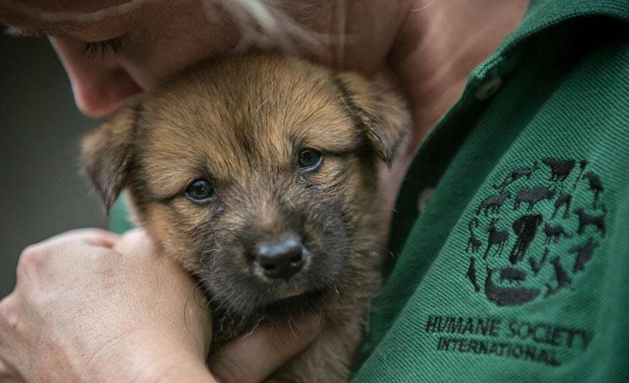 5 organizaciones que ayudan a los animales de todo el mundo - perro-1