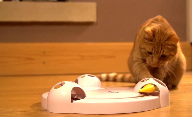 ¿Cómo preparar a tu mascota para cuando vuelvas a las actividades? - gato