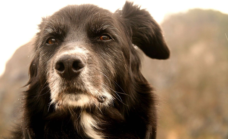 ¿Cómo afrontar la pérdida de tu mascota? - perdida-perro