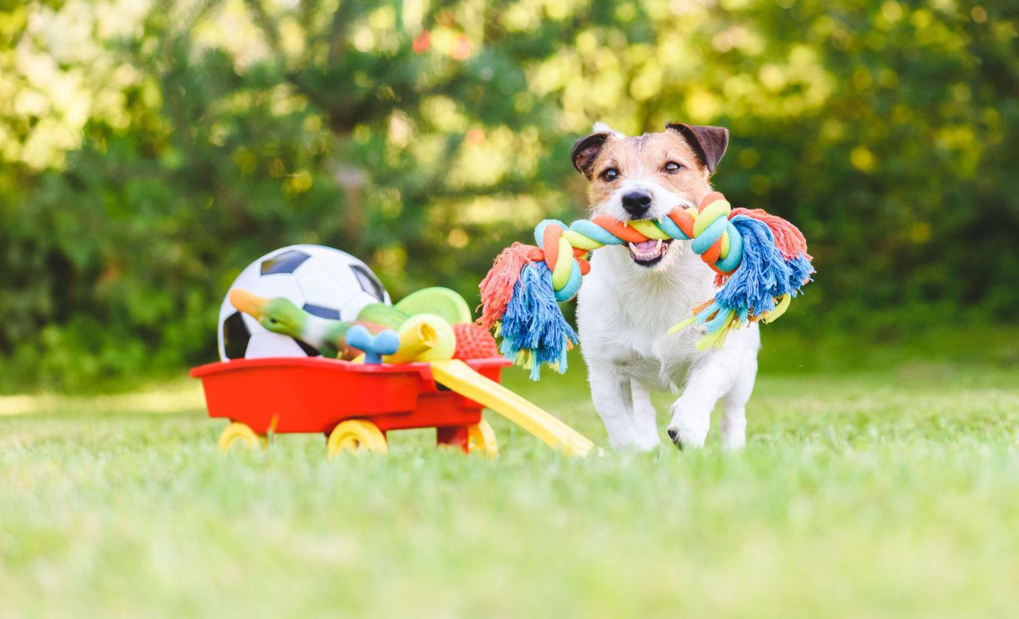 7 Juegos para entretener a tus perros en casa durante la cuarentena